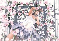 Nap Among the Blossoms