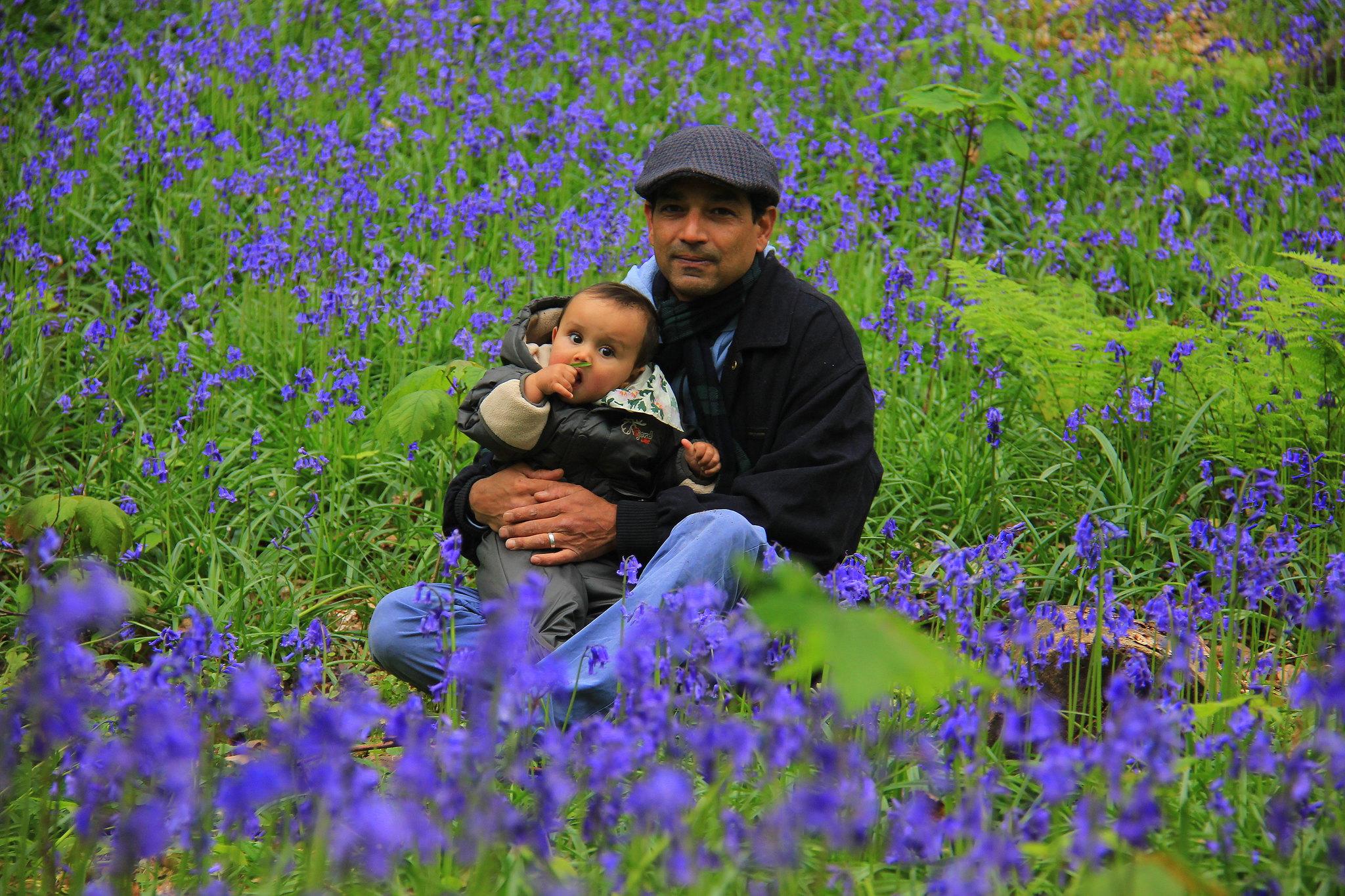 hallerbos blue forest is best visited in april