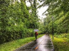 May Showers along Curtis Trail, Bluemont Neighborhood, Arlington Virginia 8:19 a.m. 5/11/17