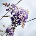 flowering above