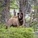 Mama Bear by ritchey.jj