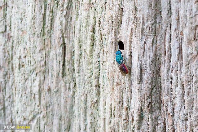 Holey oak inhabitants