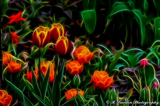 My version of Tulips in the Park