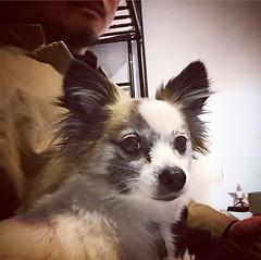 Sup Jack.  Hi @lianne507 👋! . . #dogsofinsta #cute #dog #doge #pets #boop #woof #LA #SGV #latergram