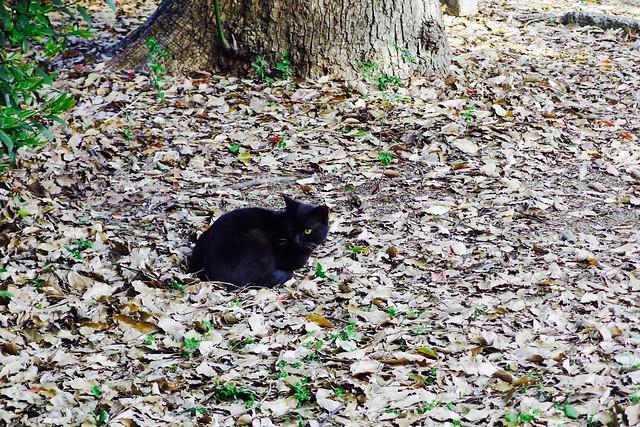Today's Cat@2017-05-06