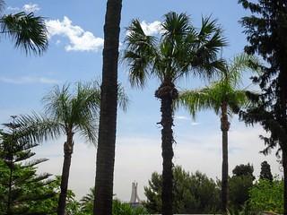 #bonjour #salamaleikum #hello #azul #algiers #algeria #alger #algerie #monument #maqam #palmtrees #palmiers #bardo #musee #palais #museum #palace