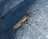 caddis fly_edited-1