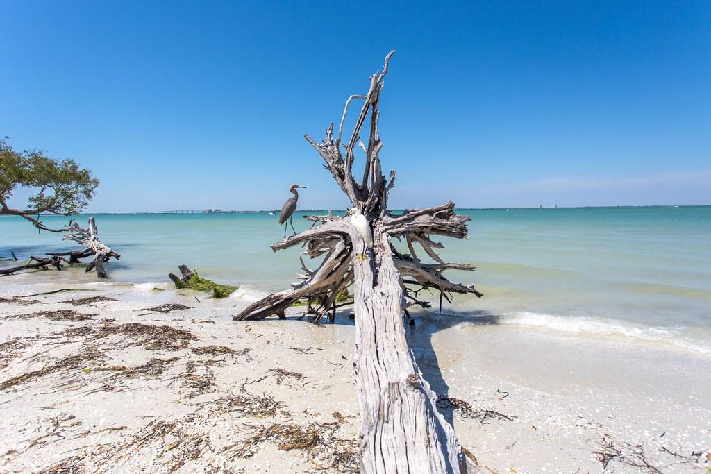 Picnic Island Punta Rassa Florida