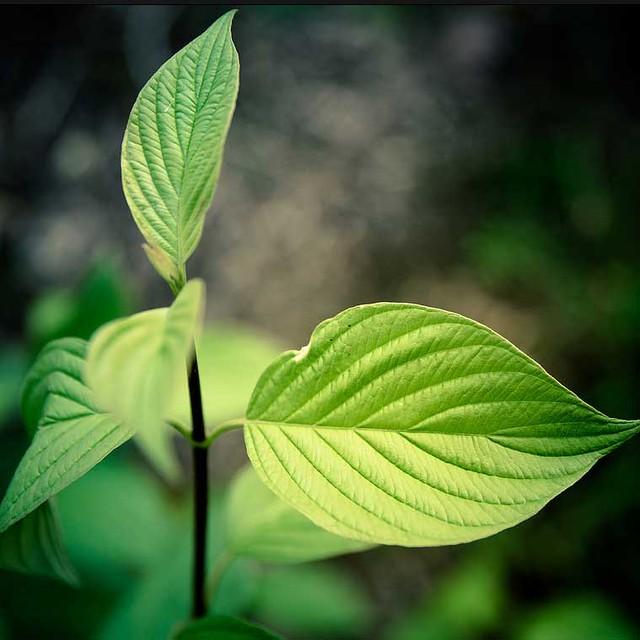 leaf-nature