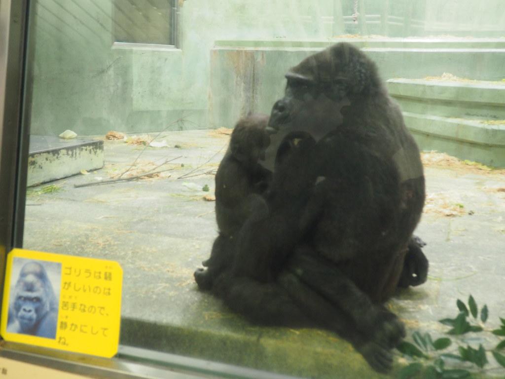 2017年5月3日東山動植物園