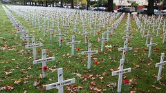 Field of Remembrance - Cranmer Square