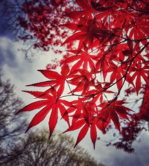 Spring Sunday, Kew Gardens, NY  #LGG6