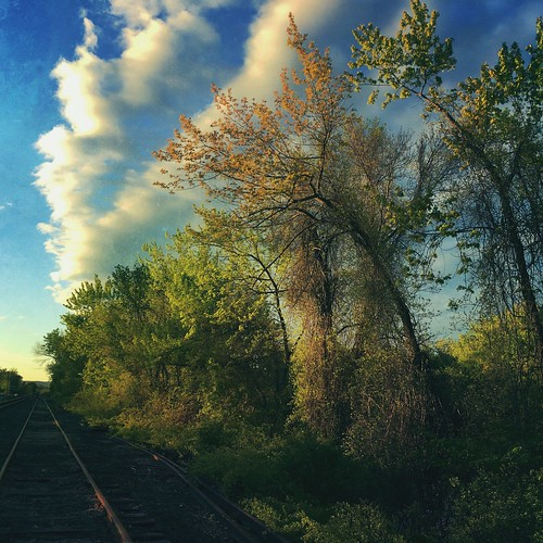 sunset tracks vanishingpoint leadinglines clouds sky nature mobilephotography iphonography landscape mextures trees