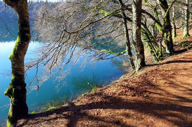 Auverniae. Lac Pavin. p41017 (713)