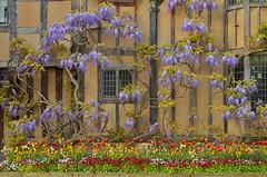 Primavera inglese / English Spring (Stratford-upon-Avon, Warwickshire, United Kingdom)