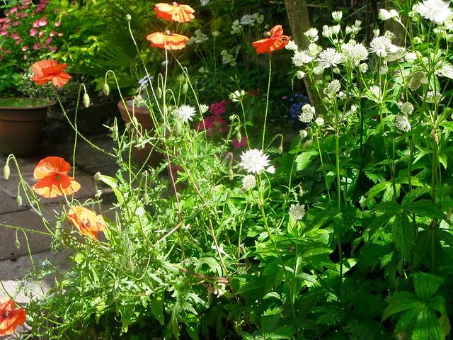 My garden, Canon POWERSHOT G9