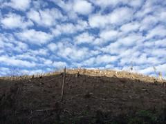 Oregon skies Oregon logging
