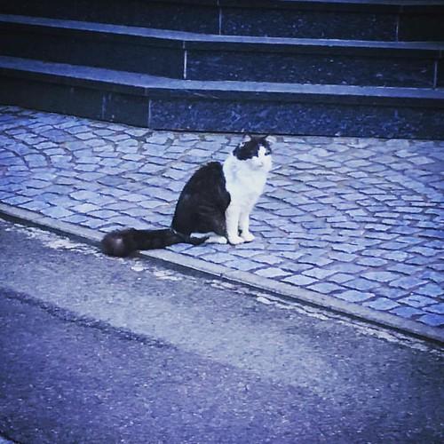 Katze #kedi #katzen