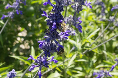 2001 Wildflowers and bees