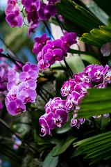 ny botanical garden orchid show-7