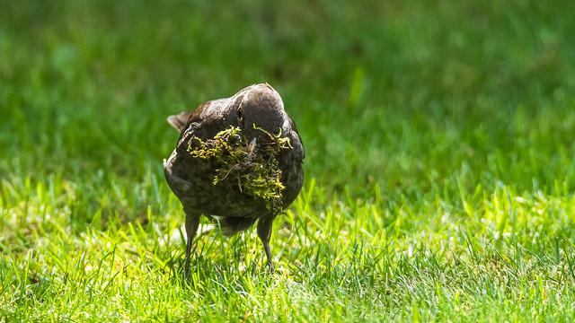 Gathering moss, Nikon D7100, Sigma 150-600mm F5-6.3 DG OS HSM | S