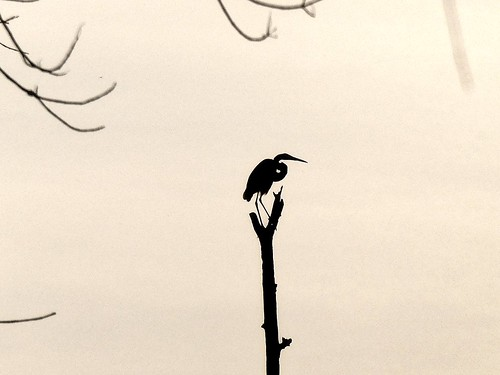 pgparks heron jugbay lumix maryland panasonic park patuxent patuxentriverpark photolemur princegeorgescounty princegeorgescountydepartmentofparksandrecreation silhouette tz90 wetlands zs70