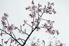 Photo:IMG_6922-7 By zunsanzunsan