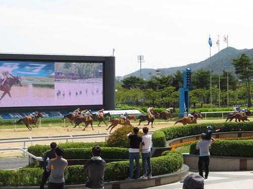 釜山慶南競馬場のゴールシーン