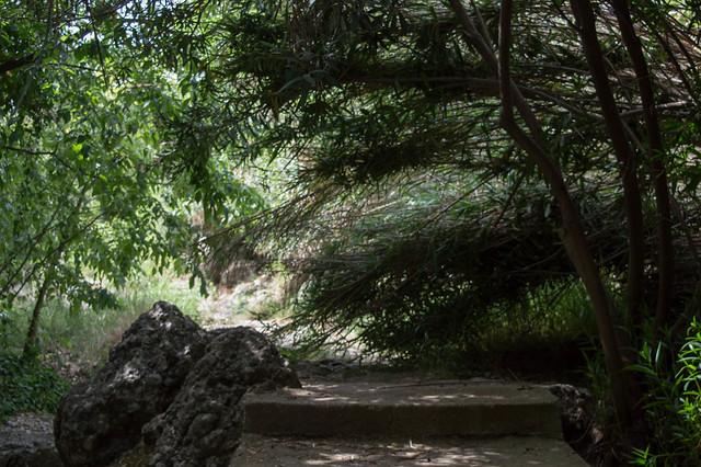 Πεσμένα καλάμια Κοιλάδα Ψίνθου