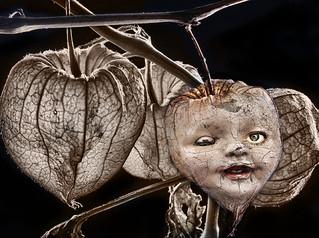Physalis Pod Doll