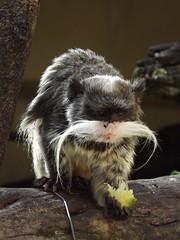 BH em Cantos: Mimos e cuidados - Programa Bem Estar Animal Fundação Zoo-Botânica