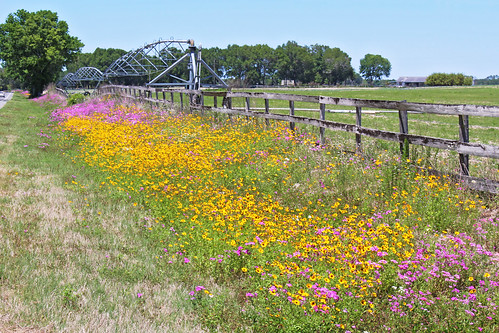 landscape scenery spring field flowers wildflowers fence newberry florida