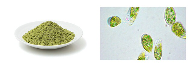 ユーグレナ(ミドリムシ)ファームの緑汁