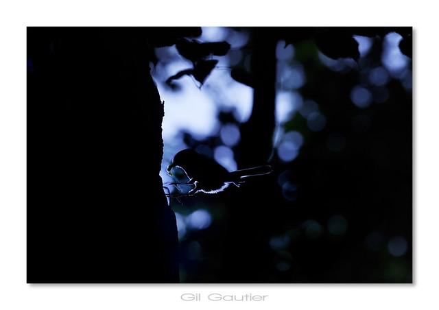 Natur'Ailement bleu