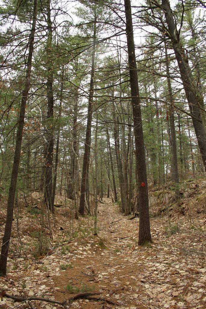 Cranberry Bog 06