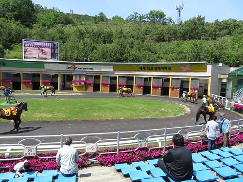 釜山慶南競馬場のパドックの様子