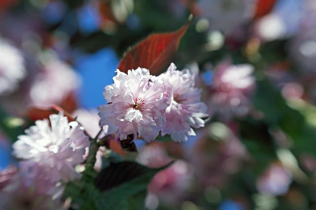 that sweet flower of love