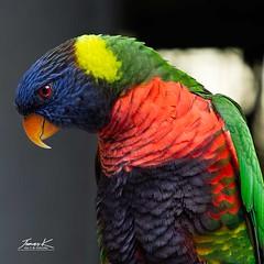 Viewsonic Bird