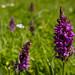 142. Orchid season