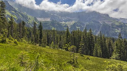 pilatus tomlishorn fräkmünt eigenthal luzern lucerne schweiz suisse svizzera switzerland mountain forest marshymeadow clouds haze summer nature landscape alpinelandscape canon eos 7d stefsan ©stefansandmeier