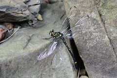 Injured Dragonfly