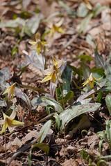 金, 2017-04-14 13:58 - New York Botanical Garden (Bronx)