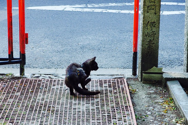 Today's Cat@2017-05-20