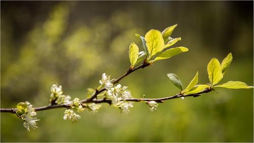 springtime .