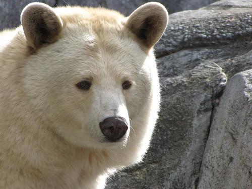 Bears @ zoo Jun 5 (3)