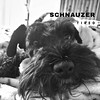 #schnauzer
