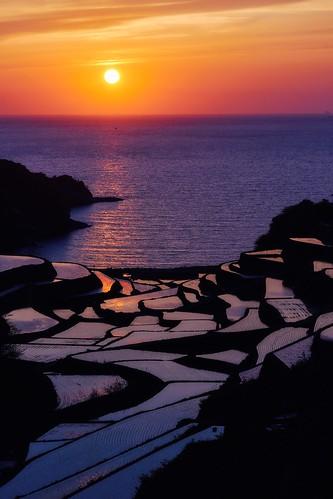 paddy japan saga landscape