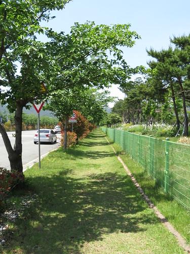 釜山慶南競馬場への歩道