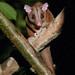 Woolly Opossum (Tarina Hill)