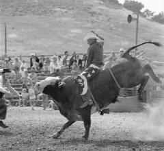 CVD 1967:  Bull Riding